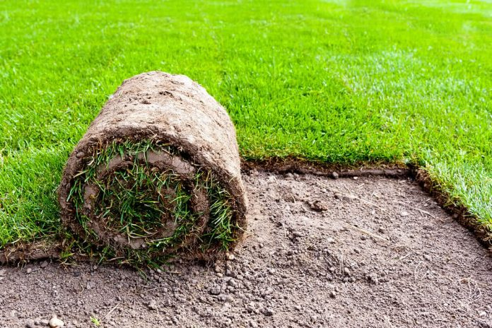What Is The Best Grass For Your Garden?